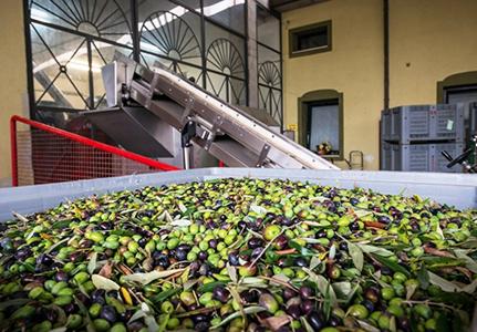 Olivenoel-Produktion-San-Luigi-Besichtigung